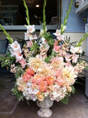 large_peach_garden_roses__hyd__glads